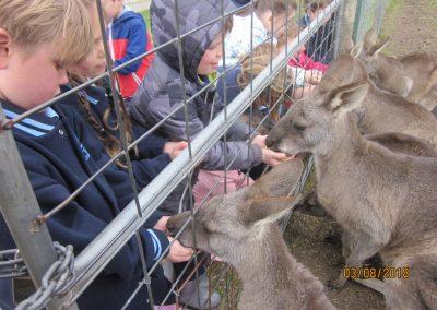 Myuna Farm Excursion